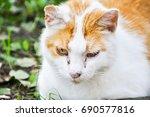 sick cat | Shutterstock . vector #690577816