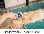 grooming cat with tool for... | Shutterstock . vector #690706549