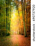 amazing autumn in the forest in ... | Shutterstock . vector #690737920