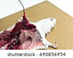rat dissection  cut and dissect ... | Shutterstock . vector #690856954