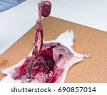 rat dissection  cut and dissect ... | Shutterstock . vector #690857014