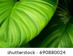 Close Up Detail Tropical Natur...