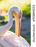 Pink Pelican In Natural Nature...