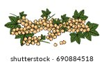 white currant with green stem... | Shutterstock .eps vector #690884518