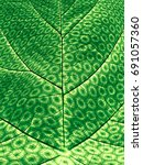 synthetic photosynthesis  ... | Shutterstock . vector #691057360