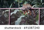 lizard taking a nap on the fence | Shutterstock . vector #691087240