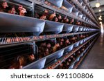 factory chicken egg production. ... | Shutterstock . vector #691100806