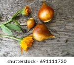 Tulip Bulbs  On A Wooden...
