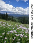 Small photo of Alpine Aster Adorn a Ridge on Vail Pass Colorado
