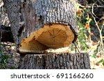Small photo of Tree Age