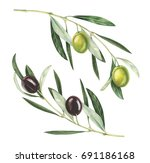 olive branches isolated on... | Shutterstock . vector #691186168