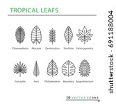 icon set   tropical leaf. eps... | Shutterstock .eps vector #691188004