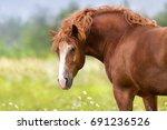 Beautiful Big Red Draft Horse...