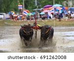 Small photo of Traditional buffalo race rake in mud field festival in Chonburi province ,Thailand . This even always set before rice planting season express importance of buffaloes