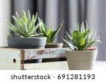aloe brevifolia succulent and... | Shutterstock . vector #691281193