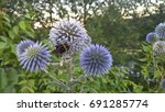 blue thistle  bumblebee. icon ...   Shutterstock . vector #691285774