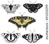 butterfly collection   vector... | Shutterstock .eps vector #691310299