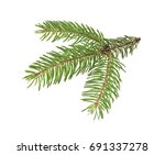 branch of christmas tree... | Shutterstock . vector #691337278