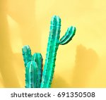 cactus fashion set. sweet... | Shutterstock . vector #691350508