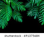 green leaves of monstera... | Shutterstock . vector #691375684