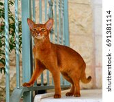 Small photo of Abyssinian cat near the railing