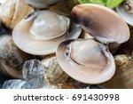 fresh enamel venus shell ... | Shutterstock . vector #691430998