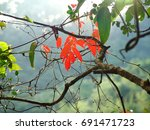 kam shan country park  hong kong | Shutterstock . vector #691471723