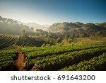 strawberry farm  doi angkhang... | Shutterstock . vector #691643200