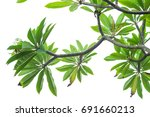 branches of trees isolated on...   Shutterstock . vector #691660213
