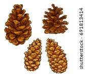 pine cone vector illustration... | Shutterstock .eps vector #691813414