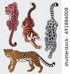 set of wild cat designs.... | Shutterstock .eps vector #691886008