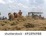 Small photo of NEW HOLLAND, PENNSYLVANIA - August 4, 2017: A young Mennonite woman operates a hay tedder at Big Spring Farm Days. This is an annual event demonstrating traditional threshing and harvesting methods.