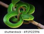 green snake | Shutterstock . vector #691922596