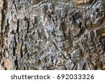 bark patterned design background | Shutterstock . vector #692033326