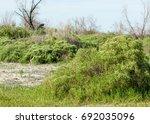 Steppe  Prairie  Veldt  Veld ...
