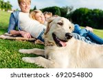 close up view of cute golden... | Shutterstock . vector #692054800