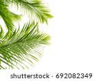palm leave isolated background   Shutterstock . vector #692082349