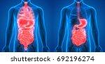 human body organs anatomy ... | Shutterstock . vector #692196274