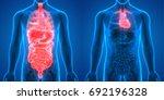 human body organs anatomy ... | Shutterstock . vector #692196328