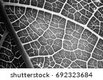black and white leaves | Shutterstock . vector #692323684
