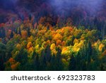 colorful autumn trees on the... | Shutterstock . vector #692323783