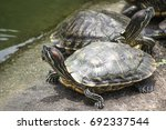 turtle  tortoise  soft shell... | Shutterstock . vector #692337544