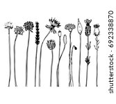 hand drawn wild flowers and... | Shutterstock .eps vector #692338870