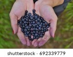 female hands holding heap of... | Shutterstock . vector #692339779