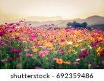 landscape of nature background... | Shutterstock . vector #692359486