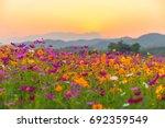 Landscape Of Nature Background...