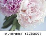 closeup fresh bunch of pink...   Shutterstock . vector #692368039