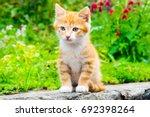 Little Red Kitten Sitting In A...