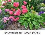 Stock photo pink rosarium uetersen roses in the garden 692419753