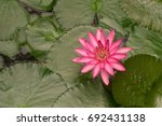 pink lotus or water lily... | Shutterstock . vector #692431138
